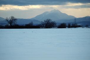 冬の北海道の雪原の素材 [FYI00128429]