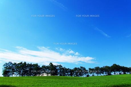 夏空と札幌の牧草地.の素材 [FYI00128432]
