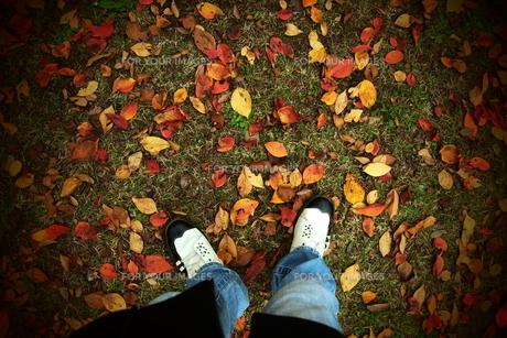 足元の落ち葉の素材 [FYI00128443]