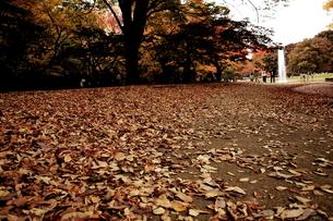 晩秋の代々木公園の素材 [FYI00128445]