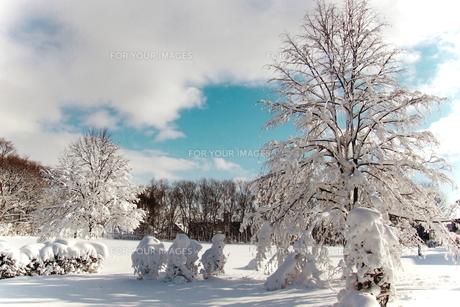冬の公園の素材 [FYI00128448]
