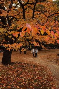 深秋の代々木公園の素材 [FYI00128454]