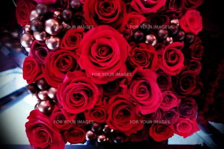 赤いバラの素材 [FYI00128465]