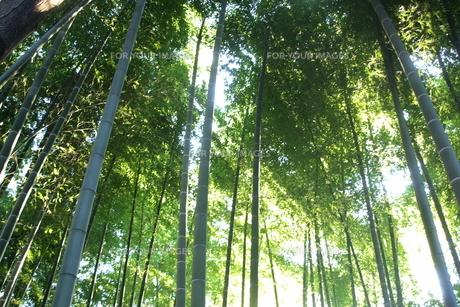 竹林の素材 [FYI00128485]