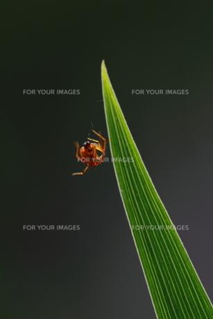 蜘蛛の写真素材 [FYI00128560]