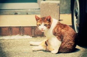 日向ぼっこする猫の写真素材 [FYI00128562]