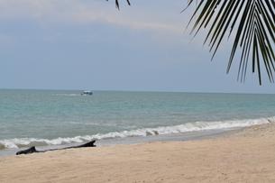 東洋の真珠 美しい砂浜のあるビーチの写真素材 [FYI00128563]