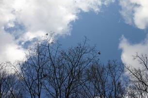 枯れ木の写真素材 [FYI00128753]
