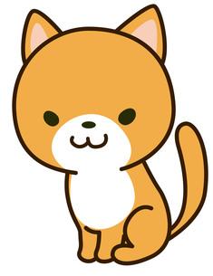 猫の写真素材 [FYI00128871]