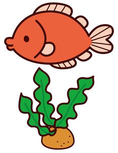 魚の写真素材 [FYI00128875]