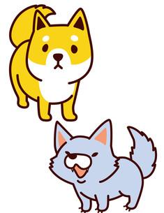 犬と狼の写真素材 [FYI00128883]