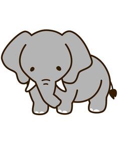 象の写真素材 [FYI00128908]