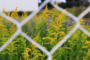 フェンスの向こうの写真素材 [FYI00128915]