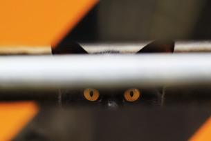黒猫の写真素材 [FYI00128918]