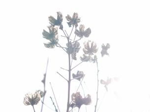 逆光の木の素材 [FYI00128965]