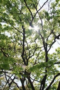 緑の葉から漏れる光の写真素材 [FYI00131216]