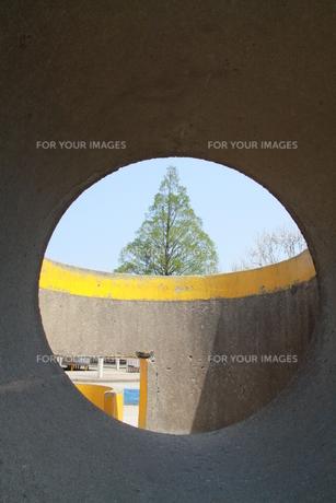丸い穴から木が見えるの写真素材 [FYI00131217]