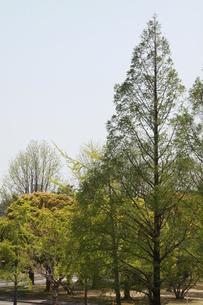快晴の下の木の写真素材 [FYI00131224]