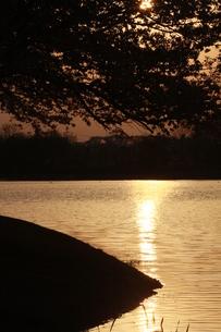 水面に映る夕日の写真素材 [FYI00131227]