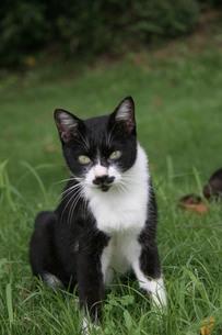 公園の猫の写真素材 [FYI00131236]