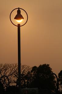 夕日の街灯の写真素材 [FYI00131237]