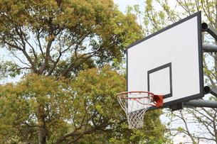 緑の中のバスケットボードの写真素材 [FYI00131238]
