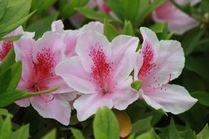 花のトリオの写真素材 [FYI00131242]