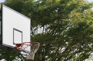 緑の中のバスケットボードの写真素材 [FYI00131244]