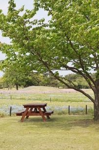 木の下のベンチの写真素材 [FYI00131252]