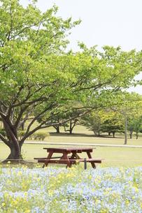木の下のベンチの写真素材 [FYI00131257]
