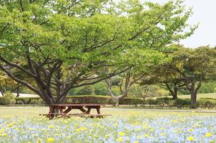 木の下のベンチの写真素材 [FYI00131269]