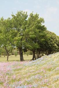 晴れの下の木の写真素材 [FYI00131271]