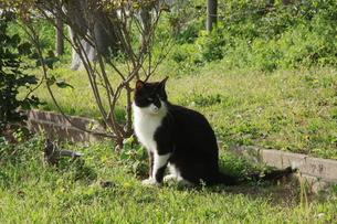 公園のネコの写真素材 [FYI00131292]