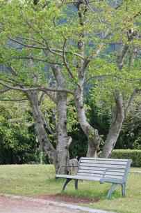 緑のベンチの写真素材 [FYI00131295]