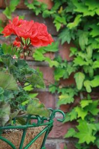 赤い花の写真素材 [FYI00131298]