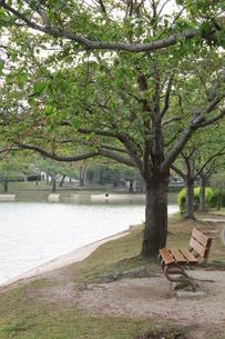 木のベンチの写真素材 [FYI00131303]