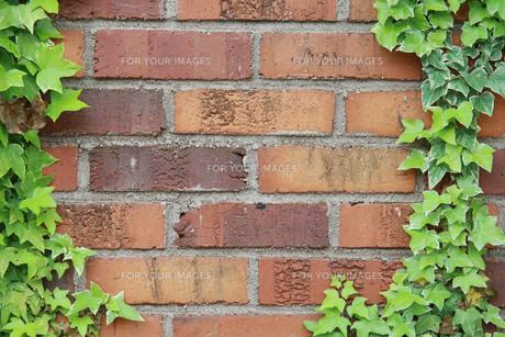 ツタとレンガ壁の写真素材 [FYI00131308]