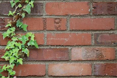 ツタとレンガ壁の写真素材 [FYI00131312]