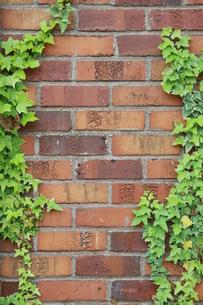 ツタとレンガ壁の写真素材 [FYI00131313]