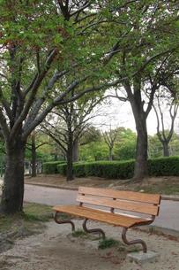 木のベンチの写真素材 [FYI00131316]