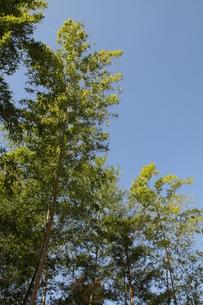 空まで伸びるの写真素材 [FYI00131362]