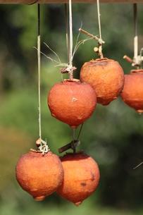 吊るし柿の写真素材 [FYI00131366]