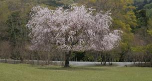 古都の春の素材 [FYI00131442]