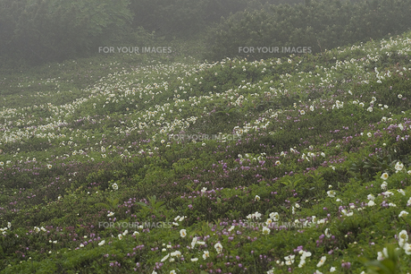 お花畑の素材 [FYI00131455]
