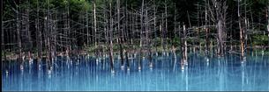 青い池の素材 [FYI00131459]