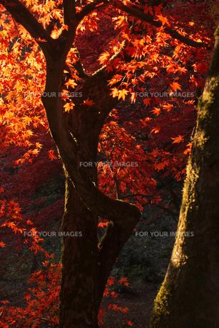 秋のイメージ(E)の素材 [FYI00131636]