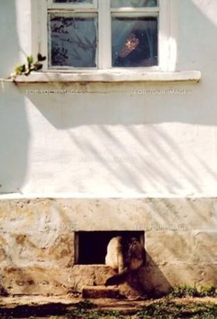 ネコの後ろ姿の写真素材 [FYI00131641]