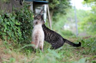 仲良し猫の写真素材 [FYI00131745]