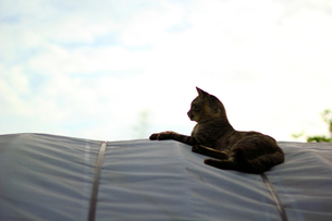 猫と空の写真素材 [FYI00131755]