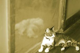 家猫、外犬の写真素材 [FYI00131785]